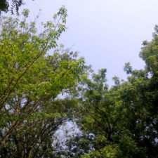 Huawei Y5C пример фото