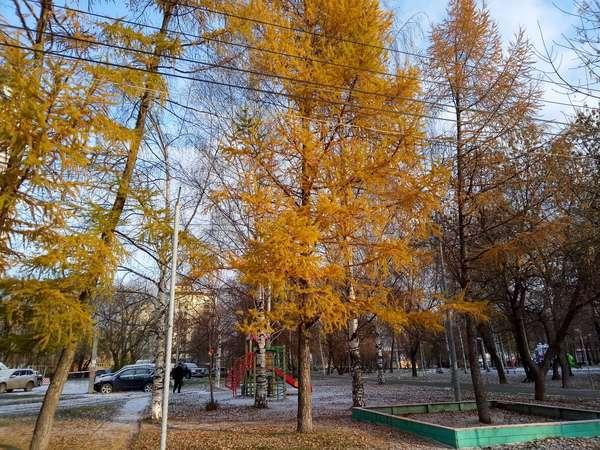 Meizu M6 фото на основную камеру