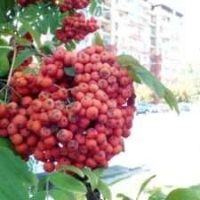 Фото ягод