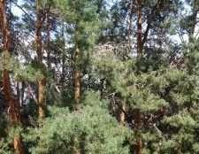 Пример фото с zte blade l3