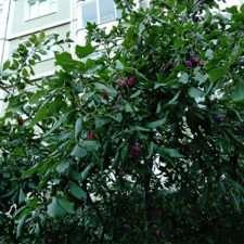 Sony Xperia E5 фото с камеры
