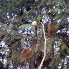 Keneksi Storm Пример фото на основную камеру