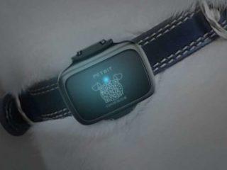 Xiaomi выпустил умный ошейник и ручной стабилизатор для смартфона