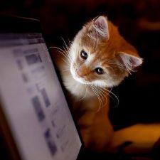 кот смотри в экран ноутбука