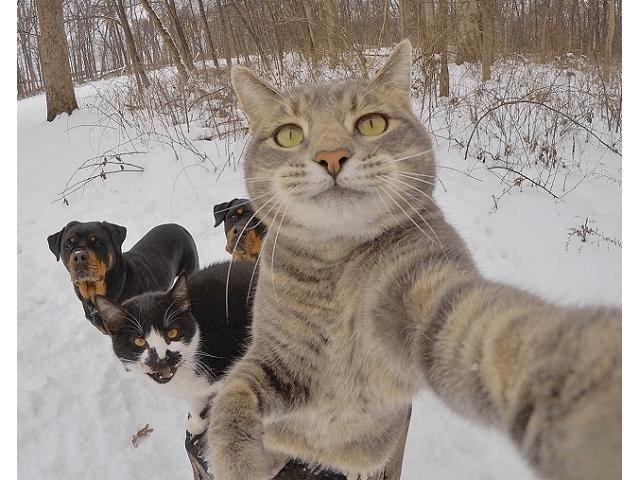 селфи кота